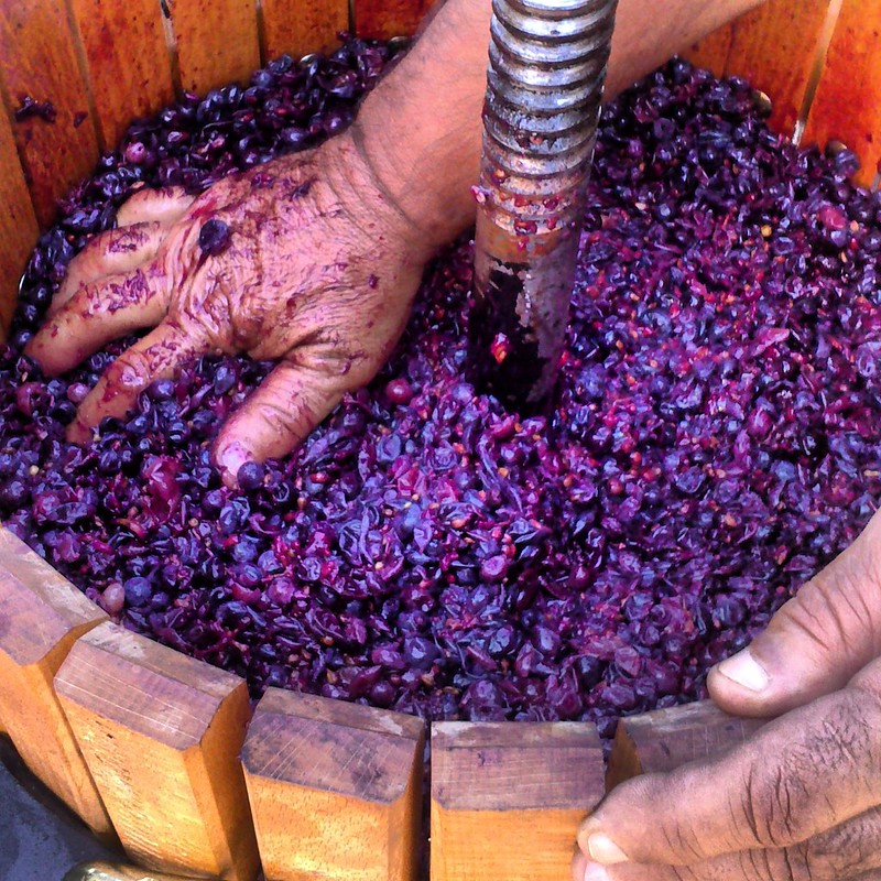 Technology may be required in order to save the grape crop